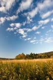 Herbst-Feld und Bäume Stockbild