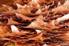 Herbst-Feuer Lizenzfreie Stockfotos