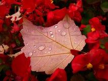Herbst Flower-bed Lizenzfreies Stockbild