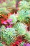 Herbst Flowerbed Stockbild