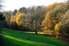 Herbst in Forest Park Lizenzfreies Stockfoto