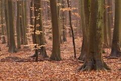 Herbst forrest Stockbilder