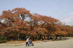 Herbst färbte Blätter Stockbild