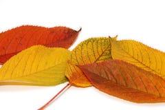 Herbst-Garten Lizenzfreie Stockbilder