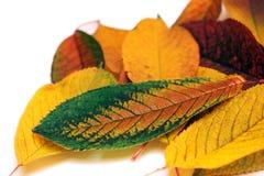 Herbst-Garten Stockbild