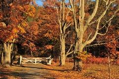 Herbst-Gatter-Landschaft Stockbild