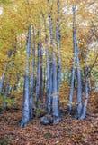 Herbst in Gdynia Lizenzfreie Stockfotografie