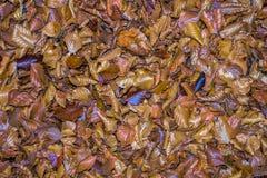 Herbst gefallene Blätter Lizenzfreie Stockfotos