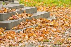 Herbst Gefallene Blätter auf der Treppe Stockbilder