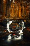 Herbst gefallene Gelb- und Rotblätter im Wasserfall auf Vitosha-Berg Stockfotos
