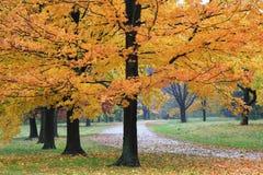 Herbst-Gehweg Stockbilder