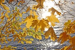 Herbst Gelb auf einem Hintergrund des Wassers wohin die reflektierten Strahlen des Sun verlässt Lizenzfreies Stockfoto