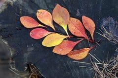 Herbst Gelbblätter auf dem hölzernen Hintergrund Lizenzfreie Stockfotografie