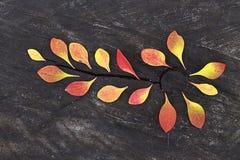 Herbst Gelbblätter auf dem Stein Stockfotos