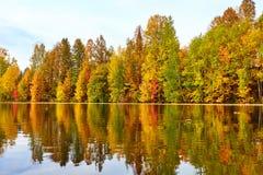 Herbst, gelbe Bäume, Wasser Stockbild