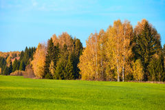 Herbst, gelbes Holz, Wiesen Stockbild