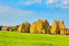 Herbst, gelbes Holz, Wiesen Stockbilder