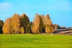 Herbst, gelbes Holz, Wiesen Stockfotografie