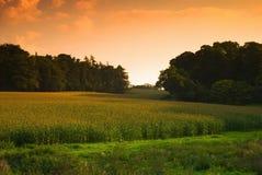 Herbst-Getreidefeld Stockfoto