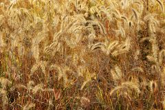 HERBST-GRAS Lizenzfreie Stockbilder