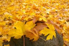 Herbst-Grundabdeckung Lizenzfreies Stockfoto