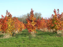 Herbst hat die Landschaft gemalt stockbild