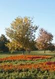 Herbst, helle Lichtung Stockfoto