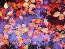 Herbst, Himmel, Blätter, Pfützen Reflexkette stockfotos