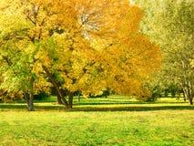 Herbst am Hinterhof und am Garten Naturhintergrund mit bunten Bäumen Lizenzfreie Stockbilder