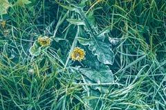 Herbst Hoarfrost auf dem grünen Gras Stockfoto