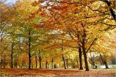 Herbst-Holz Lizenzfreies Stockbild