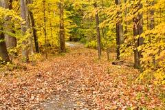 Herbst-Holz stockbild