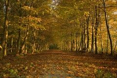 Herbst-Holz Stockfoto