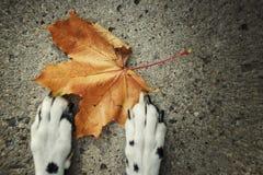 Herbst Hund, der nahe dem Blatt legt lizenzfreie stockbilder