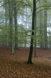 Herbst III Stockfoto