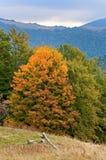 Herbst im Berg Lizenzfreie Stockbilder