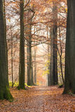 Herbst im Buchewald Lizenzfreie Stockfotos