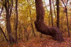 Herbst im bulgarischen Berg - Rodopi Stockbilder