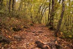 Herbst im bulgarischen Berg - Rodopi Stockbild