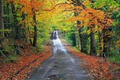 Herbst im Common, Rhydymwyn Stockbild