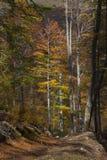 Herbst im countrside in Rumänien Stockfotografie