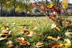 Herbst im dessau Lizenzfreie Stockfotografie