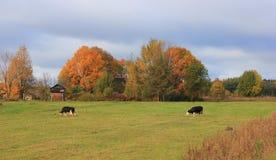 Herbst im Dorf Stockfoto