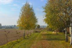 Herbst im Dorf Stockfotografie