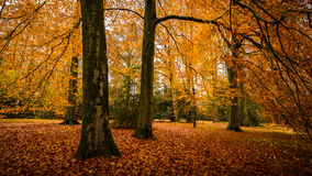 Herbst im englischen Park Stockfoto