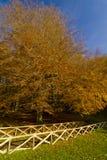 Herbst im Foresta-Schatten, Gargano, Apulien, Italien stockfotos