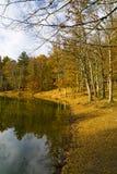 Herbst im Foresta-Schatten, Gargano, Apulien, Italien lizenzfreies stockbild
