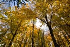 Herbst im Foresta-Schatten, Gargano, Apulien, Italien stockfotografie