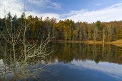 Herbst im Foresta-Schatten, Gargano, Apulien, Italien lizenzfreies stockfoto