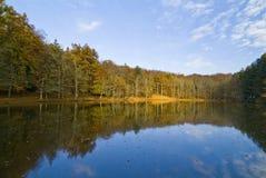 Herbst im Foresta-Schatten, Gargano, Italien stockbild